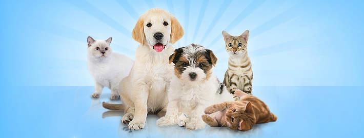 Wauies : jeu de gestion d'animalerie virtuelle